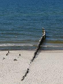 220px-gulls_on_a_polish_baltic_coast_-_25